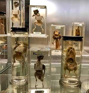 hunterian museum - london